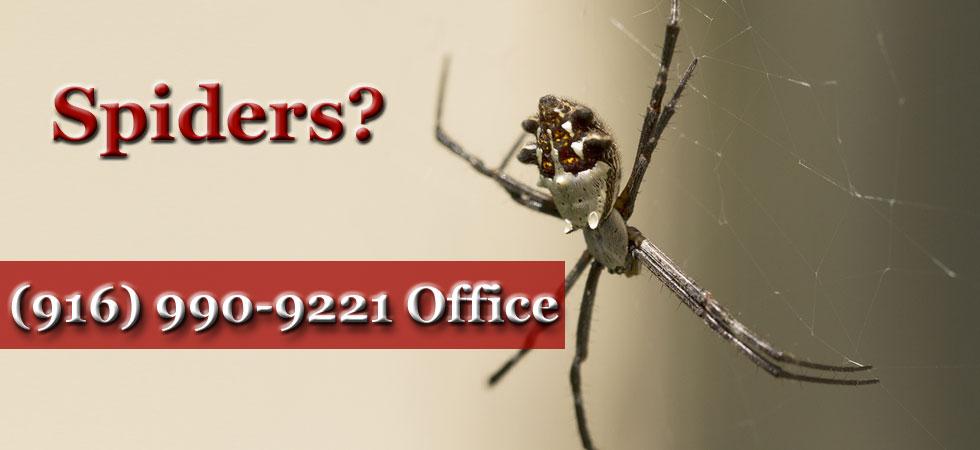spider-banner-11