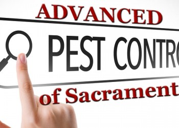 About Advanced Pest Control