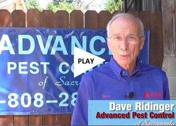 Advanced Pest Control video