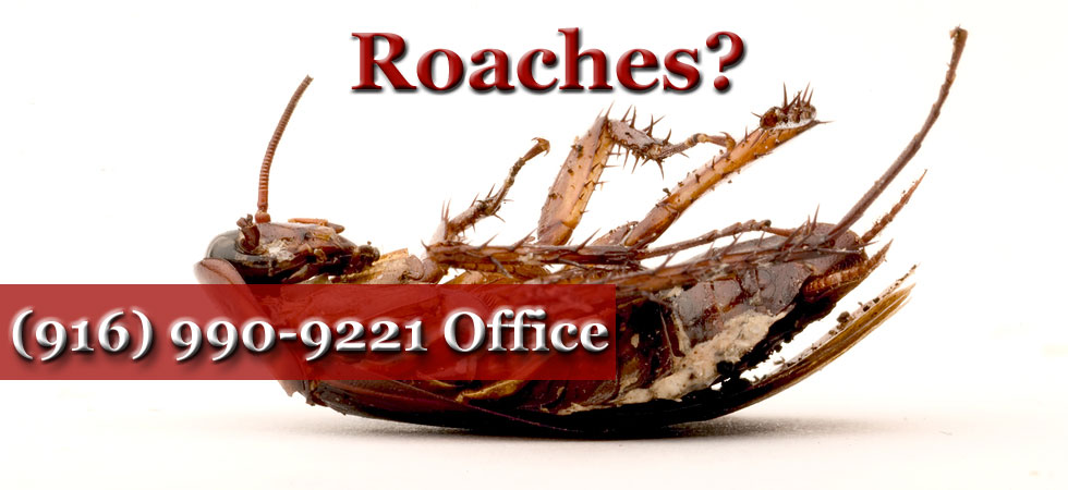 Roaches in Sacramento