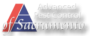 Advanced Pest Control