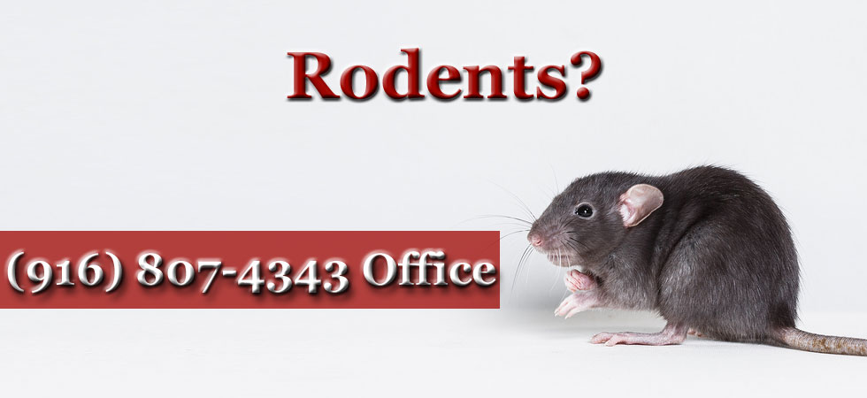 Rodent problems
