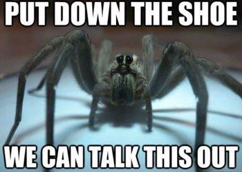 spider-in-shoe
